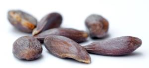 Apple Seed 1