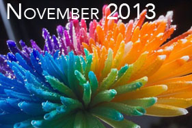 rainbow-chrysanthemum