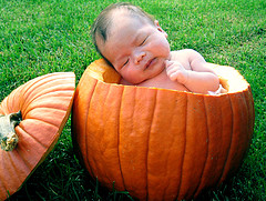 baby dlm pumpkin