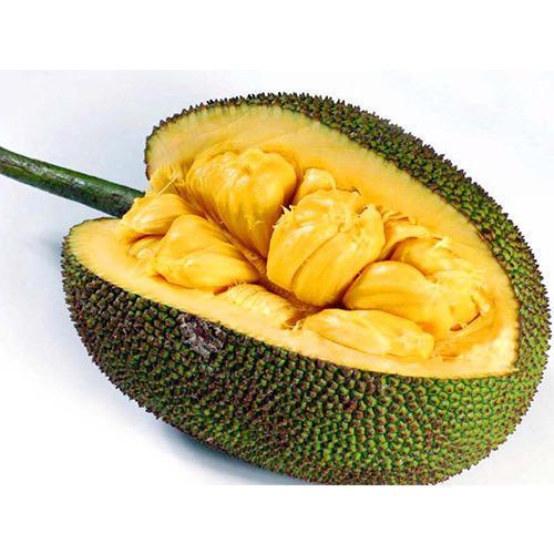 fresh-jackfruit-500x500